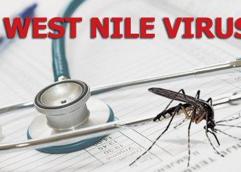 Hinweise zur aktuellen WNV-Situation und Impfempfehlung für 2021