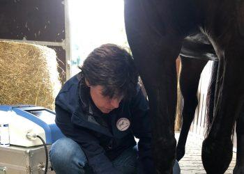 Stosswellentherapie in der Pferdemedizin